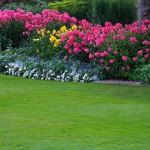 Lawn Planting